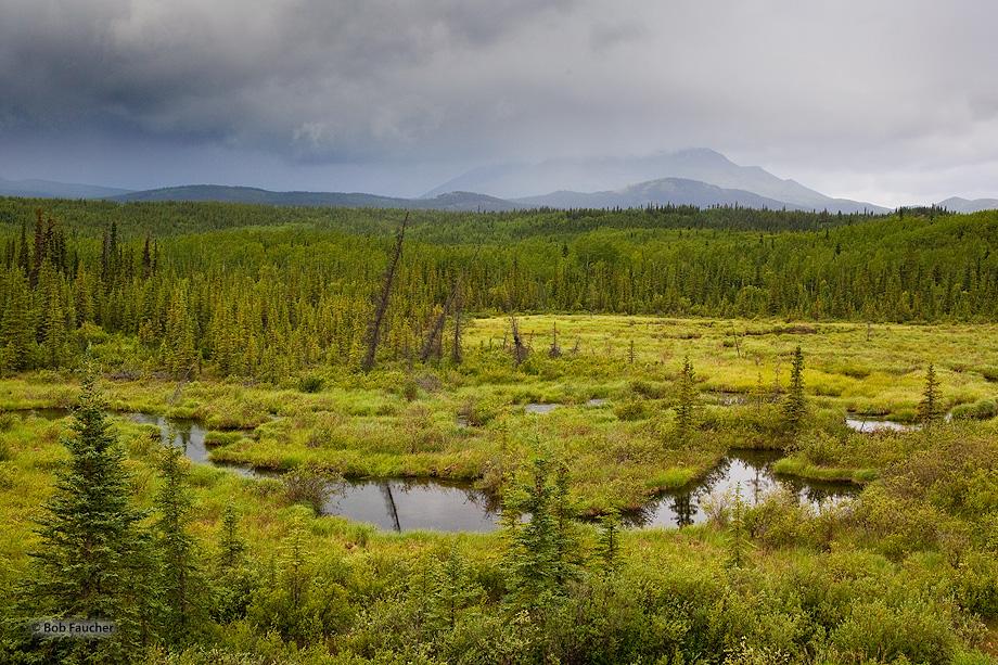 Fox Creek,below Fox Lake,Klondike Hiway,Yukon,Canada, photo