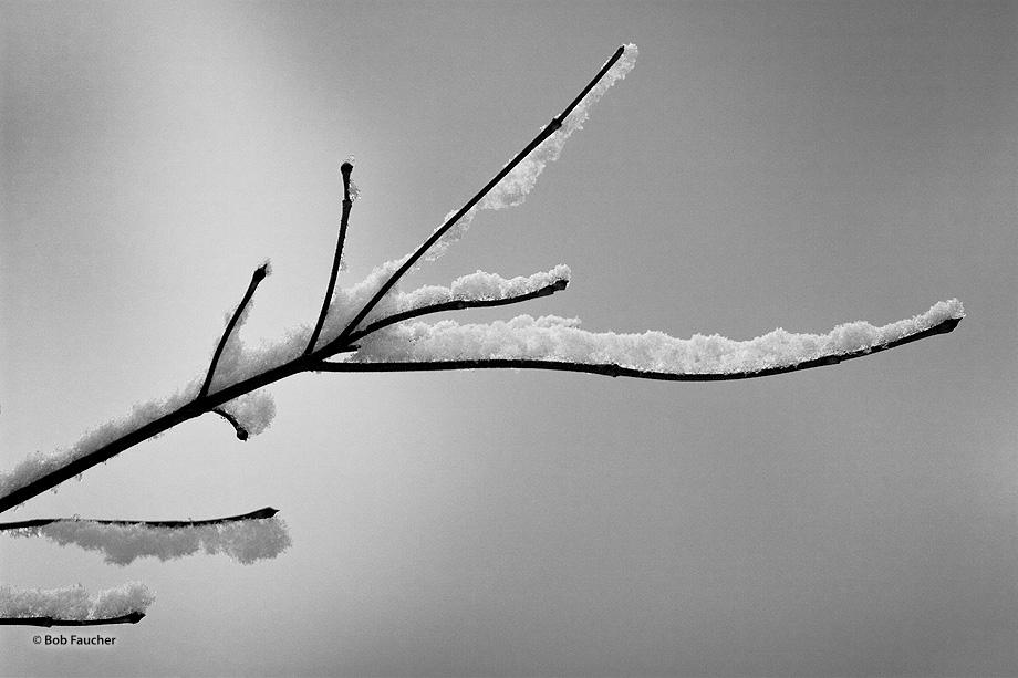 snow,tree,close-up, photo