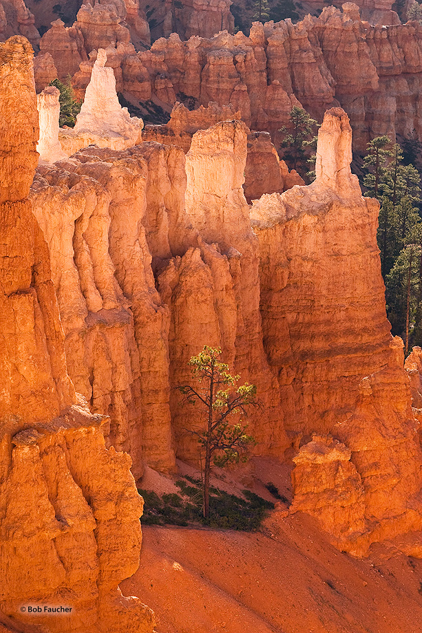 Bryce Canyon,Utah,Inspiration Point,Sunrise,Bryce Amphitheater,hoodoo,single tree, photo