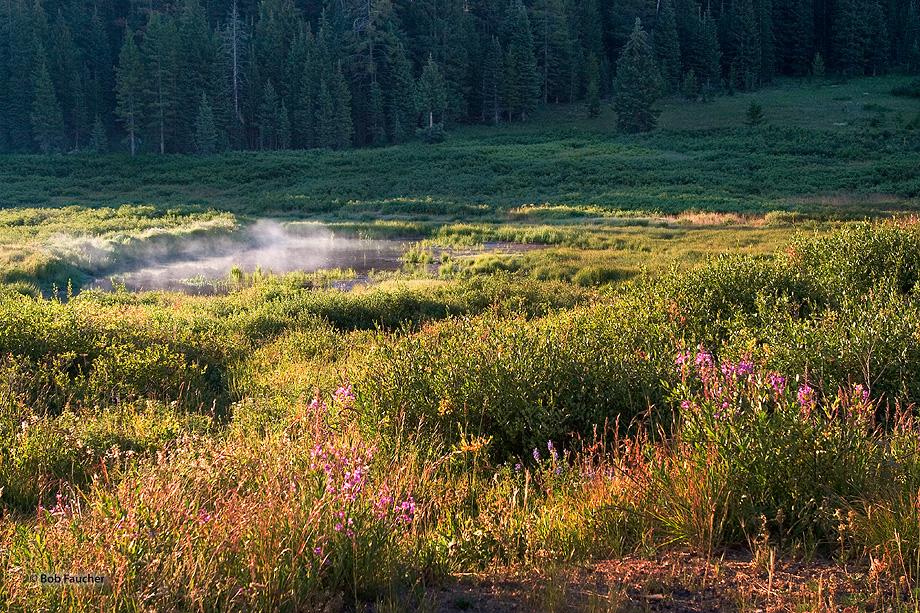 Fireweed flowers,Rabbit Ears Pass, photo