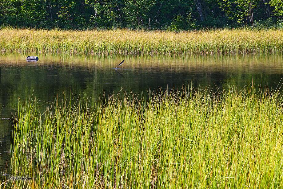 Hidden Creek,Hidden Lake,Skilak Wildlife Recreation Area,Kenai Wildlife Refuge,Kenai Peninsula,Alaska, photo