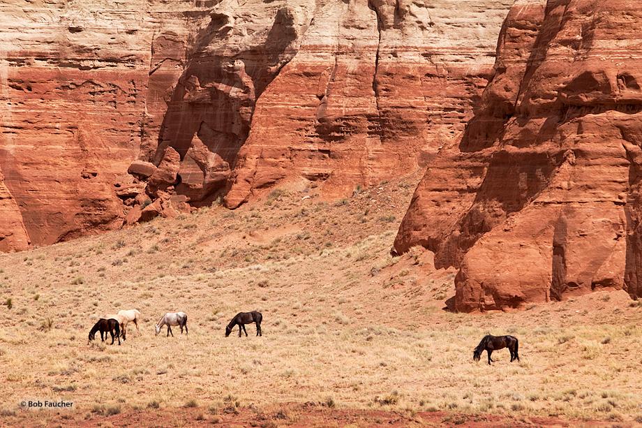 Native horses graze in the valley below Comb Ridge