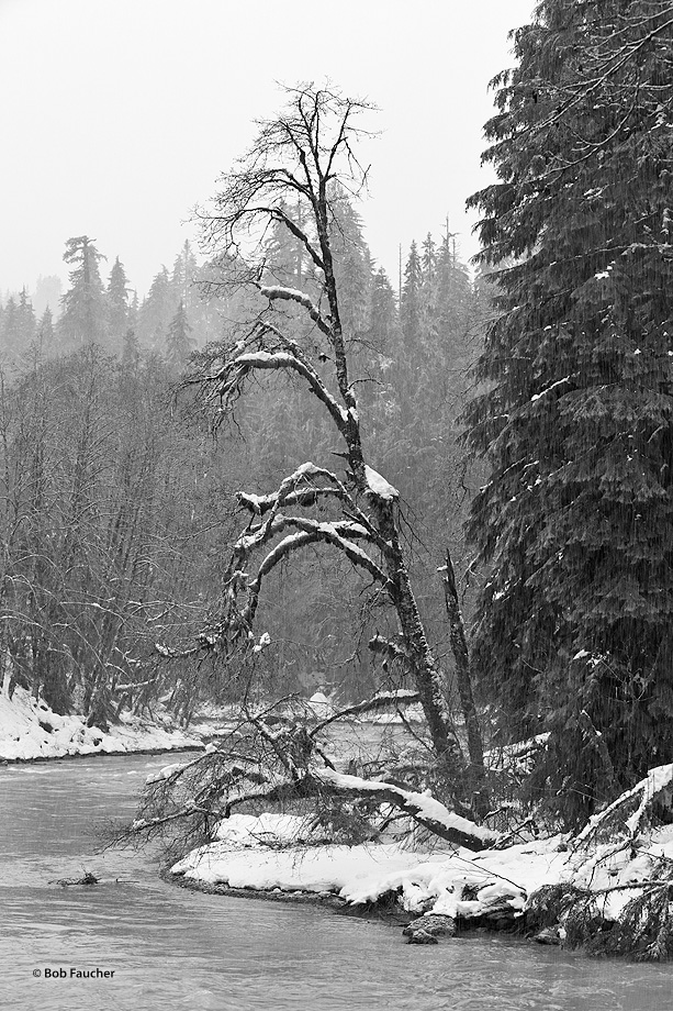 A huge Pacific Northwest winter storm heavily dumping snow. River levels rising fast. Not another soul in sight. Only the hardy...