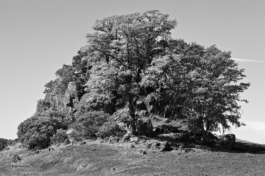 Sherwood Valley; drought; rocks; trees, photo