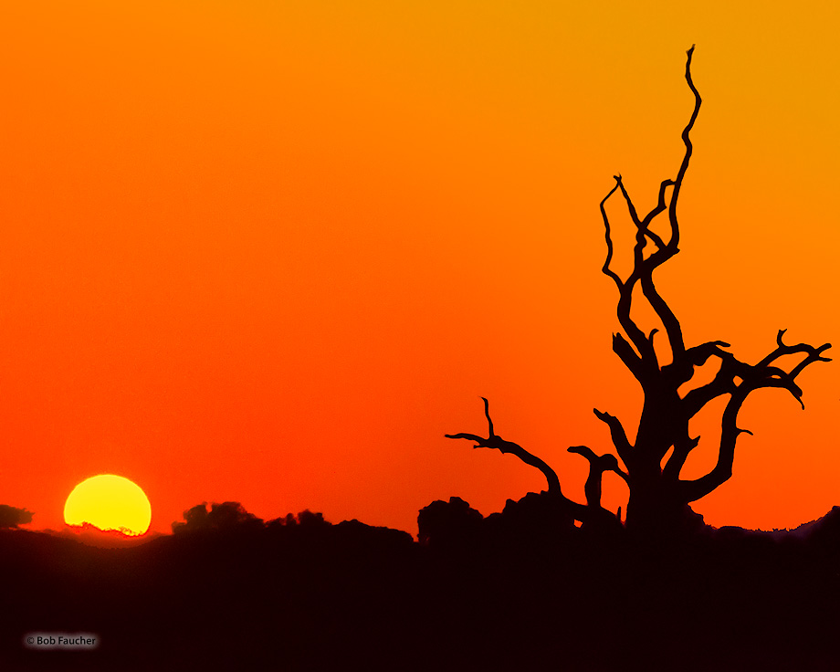 Botswana,Africa,sunset,orange, photo