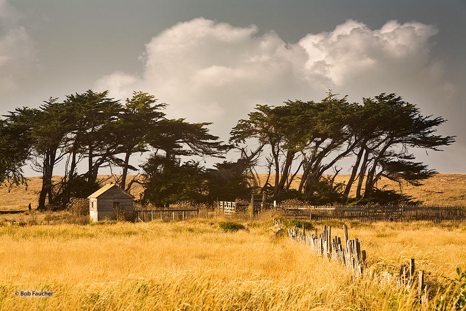 Point Arena,Mendocino,derelict building,Krummholz trees, photo