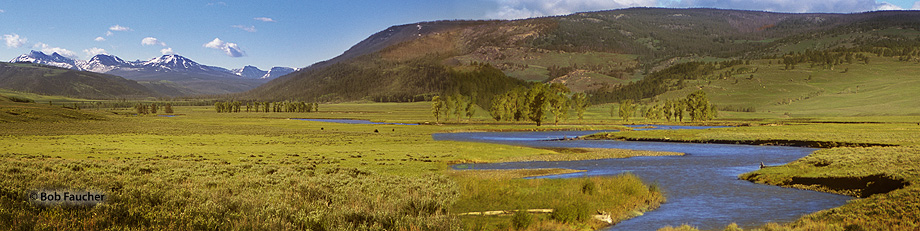 The Lamar Valley is known for its wildlife viewing. Located between Tower Junction and the Northeast Entrance at Cooke City Montana...