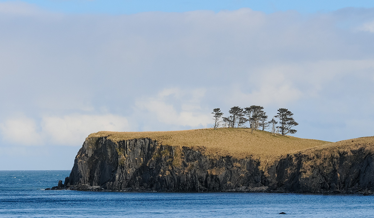 Conifers struggle for survival on the windy crest of Castle Bluff on Long Island, as viewed from Vera Bay. Photo © copyright...