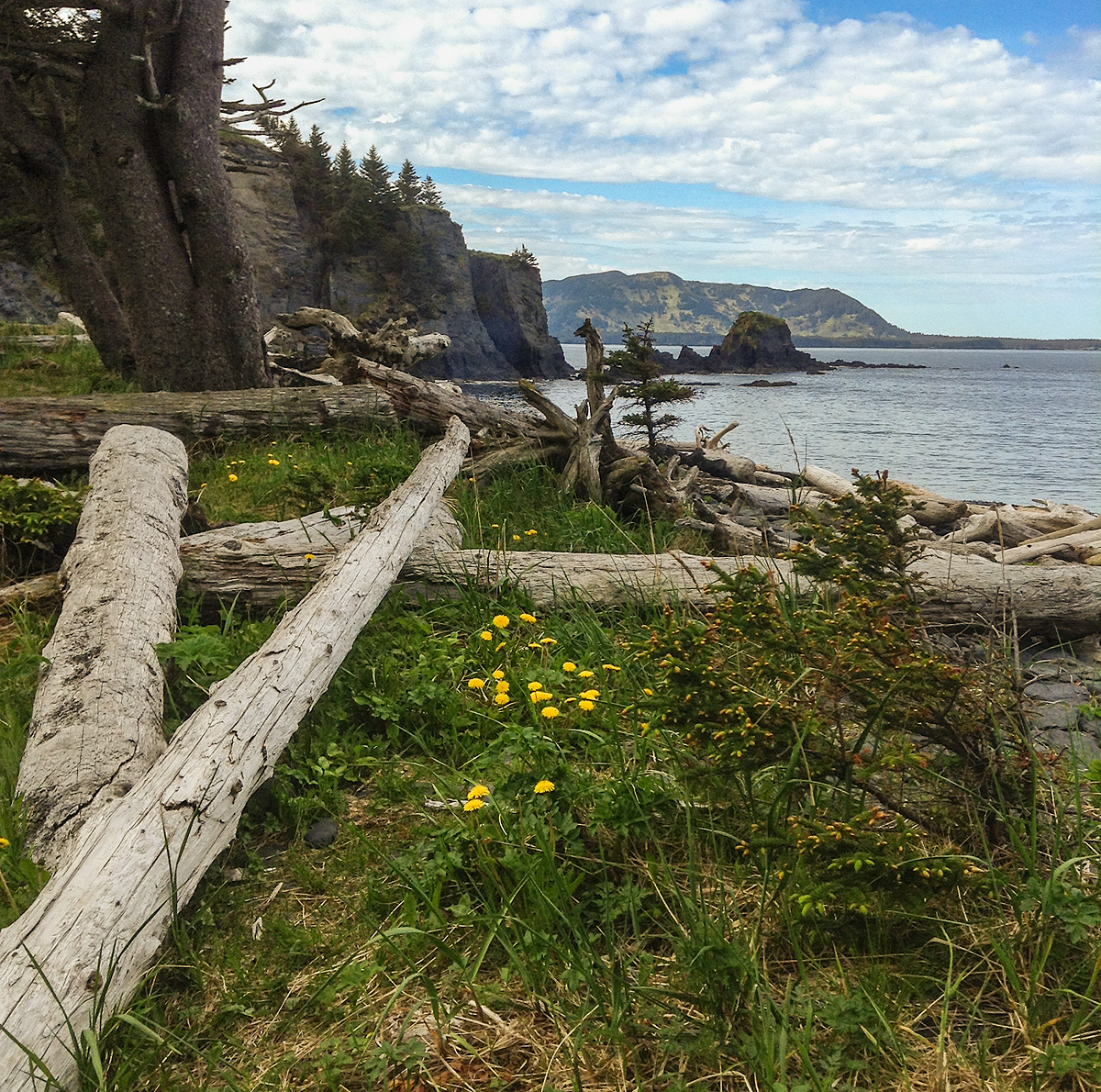 Driftwood collects along the shore of a remote beach on Kodiak Island. Photo © copyright by Michele Faucher.