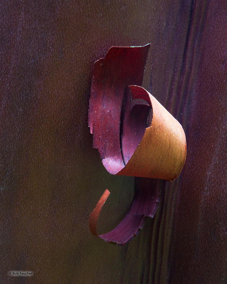 manzanita bark curls, colors, textures, photo