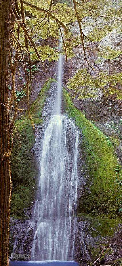 ecology,ecosystem,environment,environmentalism,habitat,nature,scenery,water,waterfall,Washington,Olympic peninsula, photo