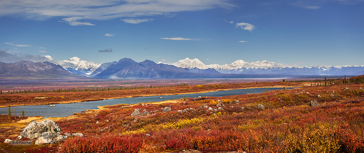 Alaska Range,Mt.Denali,Muskeg, photo