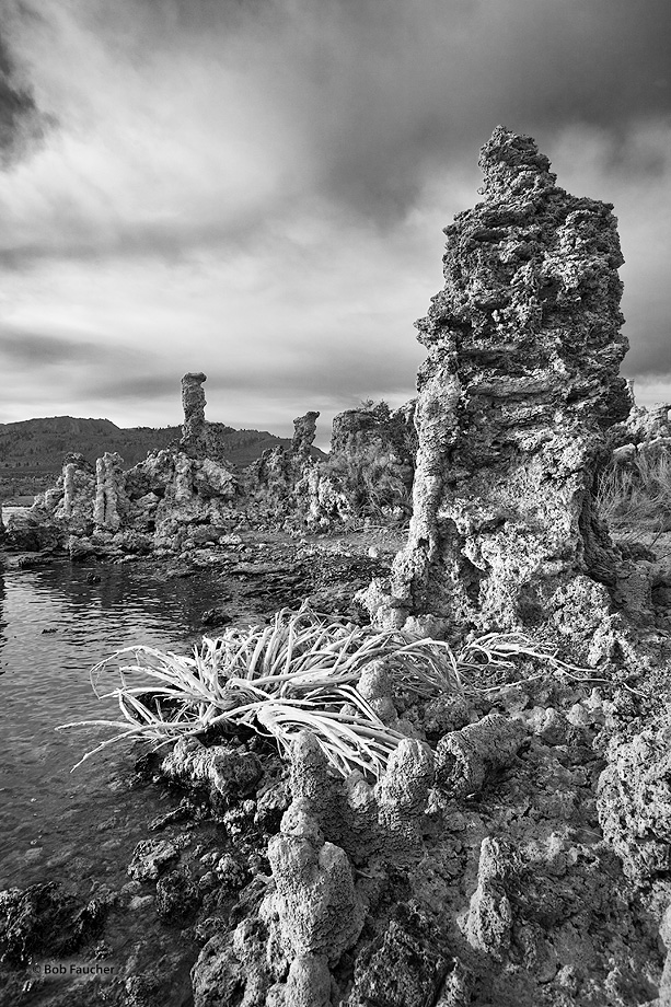 Skeletal remains of rabbitbrush at the foot of a tufa tower along the banks of Mono Lake catch early morning light under heavy...