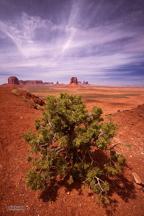 Monument Valley,Merrick Butte,juniper,clouds, photo