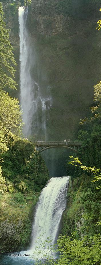 ecology,ecosystem,environment,environmentalism,habitat,nature,scenery,water,waterfall,Multnomah,Orregon,Columbia Gorge, photo