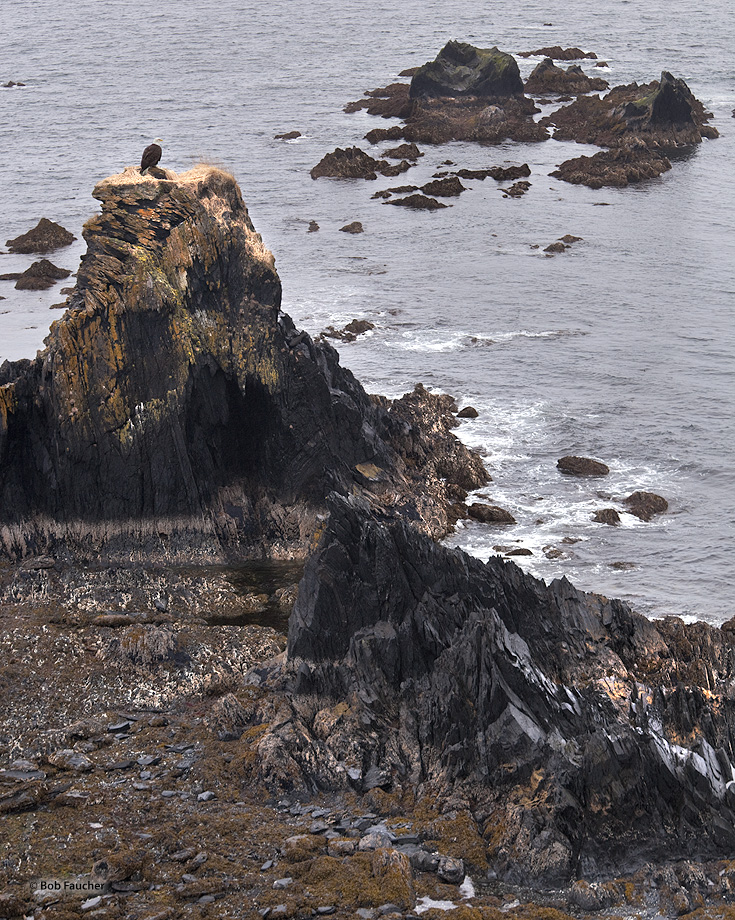 Bald Eagle,Rocky outcropping,sea,Kodiak, photo