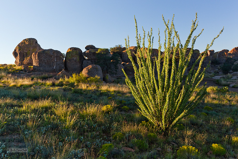 City of Rocks SP,ocotillo,sunrise,desert,boulders, photo