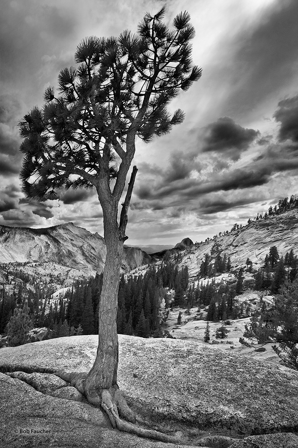Yosemite,Olmsted Point,Half Dome,Jeffrey PIne, photo