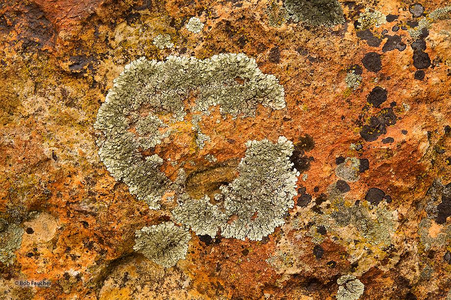 John Day Fossil Beds NM,Clarno unit,lichen, photo