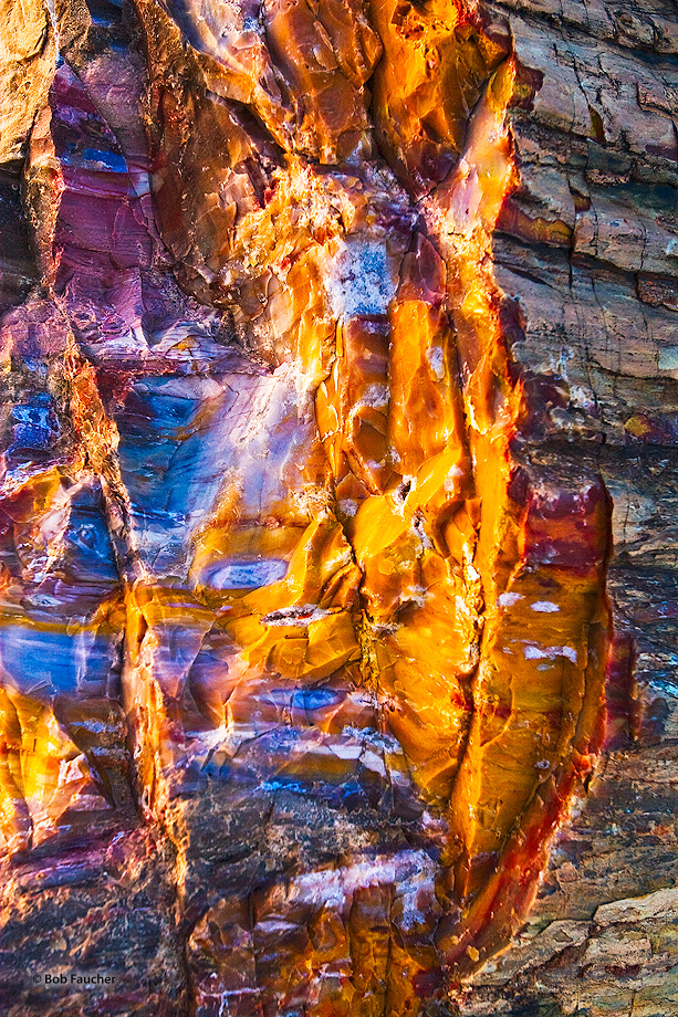 Escalante,Utah,Petrified Forest,petrified wood,color,light,textures, photo