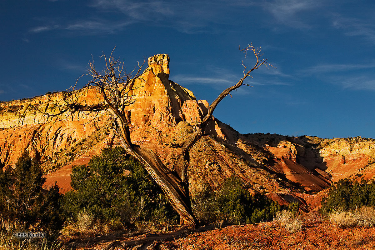 Late afternoon sun reflects off the face of Chimney Rock, framed by a forked juniper snag on Ghost Ranch.