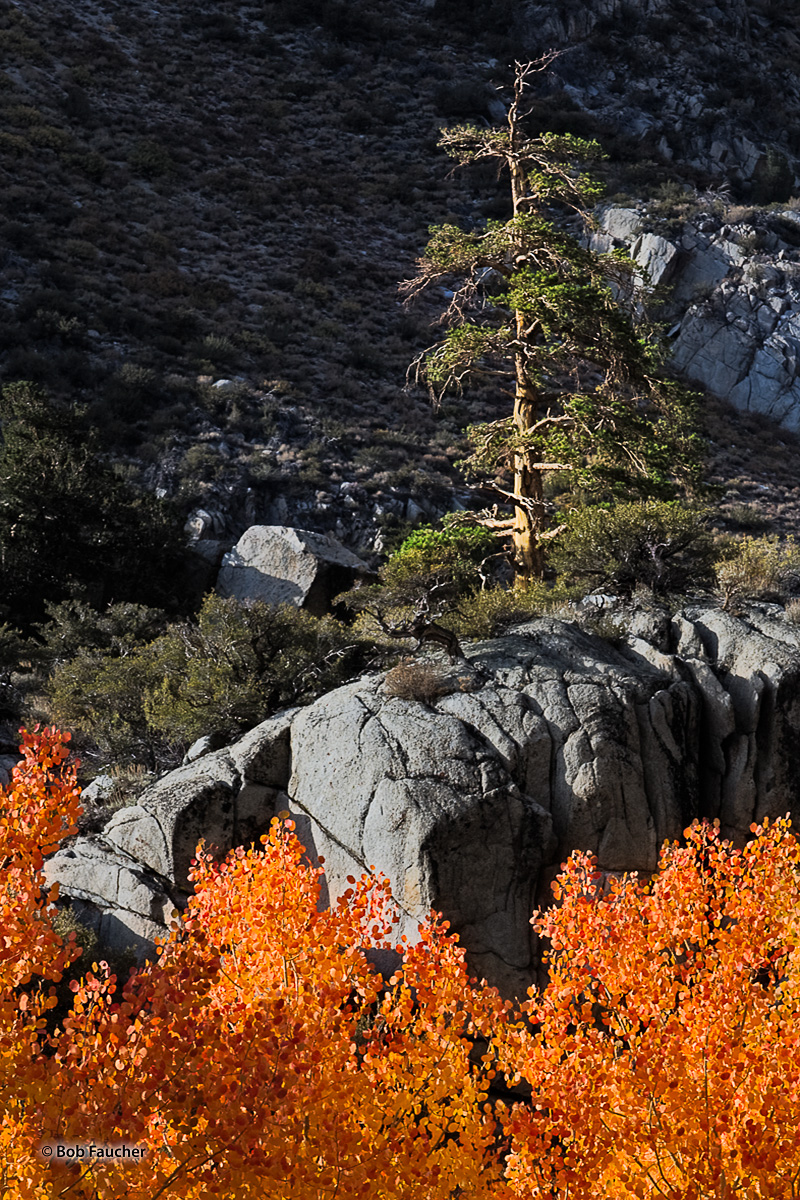 Lake Sabrina, fall color, evening, photo