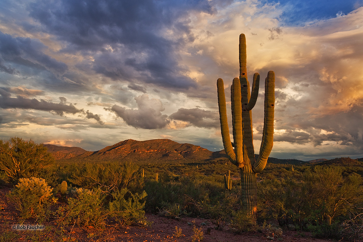 Late afternoon sunlight over Saguaro NP paints the nearby Little Rincon Mountains and overhead Monsoonal clouds various orange...