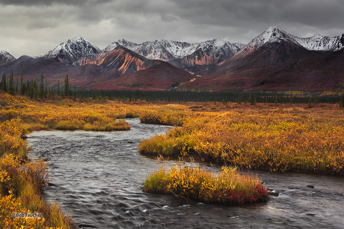 taiga,Stickwan Creek,Old Denali Hiway,Alaska, photo