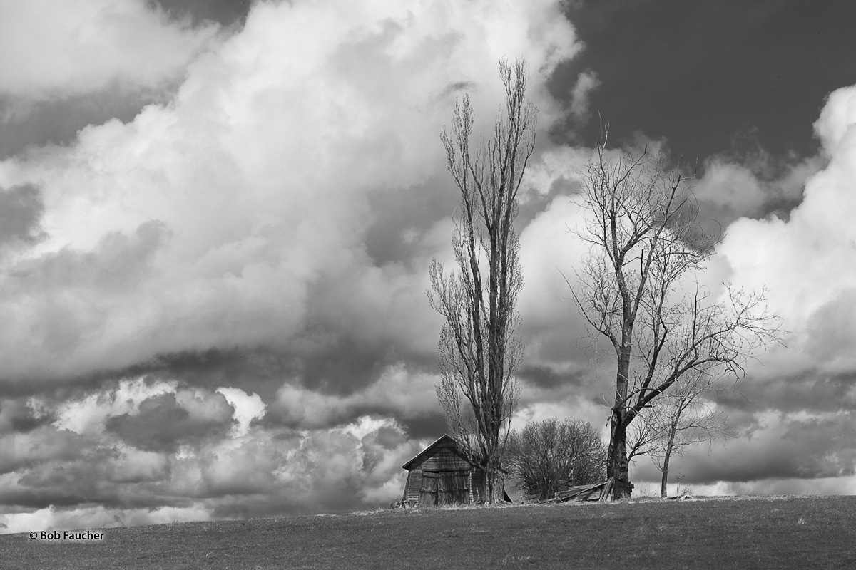 Under cloudy skies, with light rain falling, morning sunlight casts shadows from a leafless poplar on the face of an old barn...
