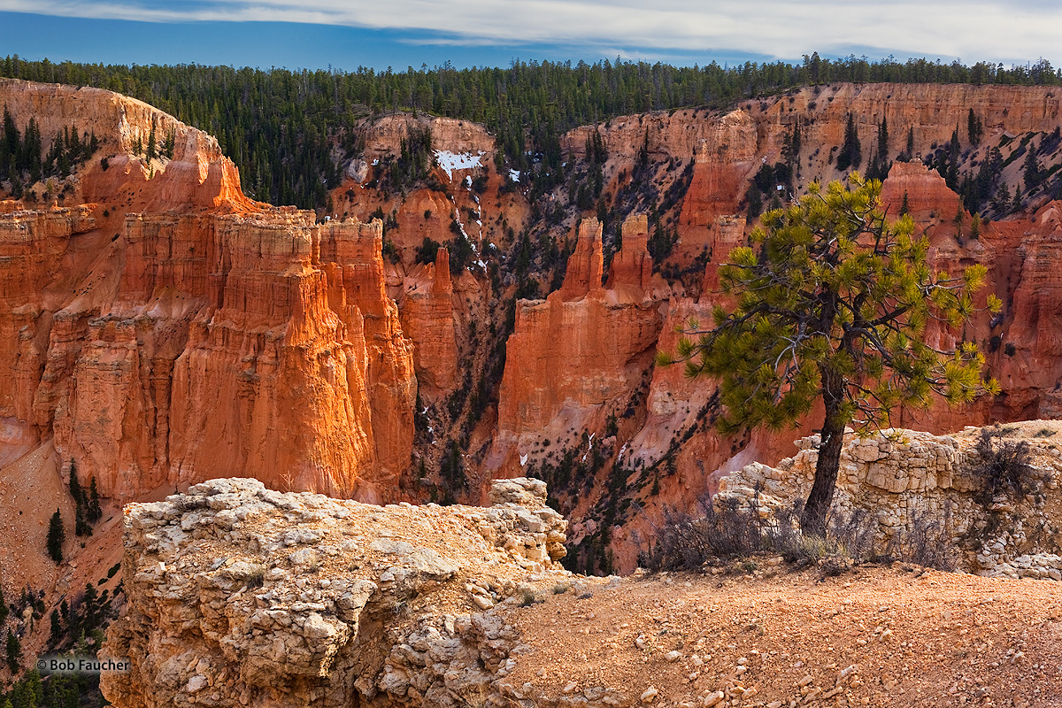 Bryce Canyon NP, Paria View Point, Limber Pine, photo