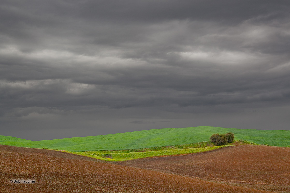 Palouse, green, plowed, photo