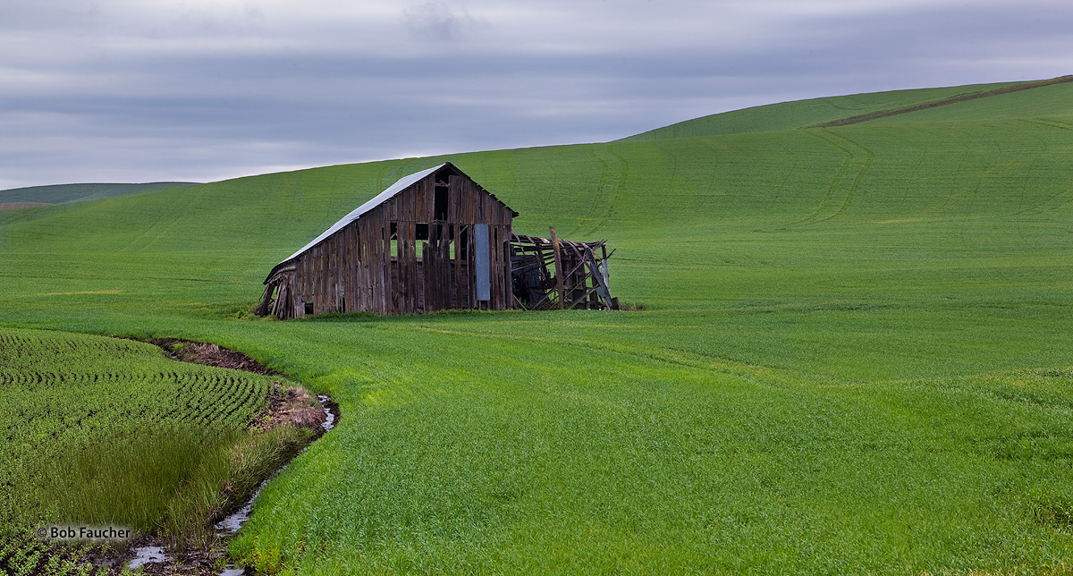 Palouse, green, derelict barn, photo