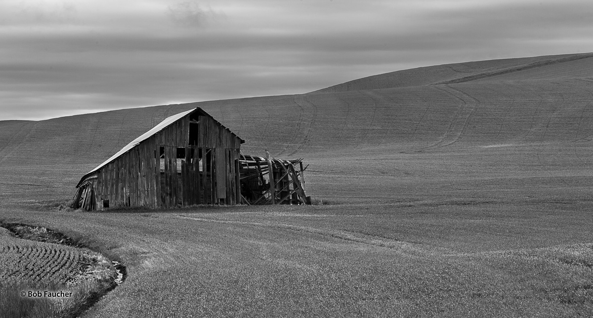 I encountered this derelict barn in the palouse area of Washington. The contrasts of fresh, green wheat against an old, dull...