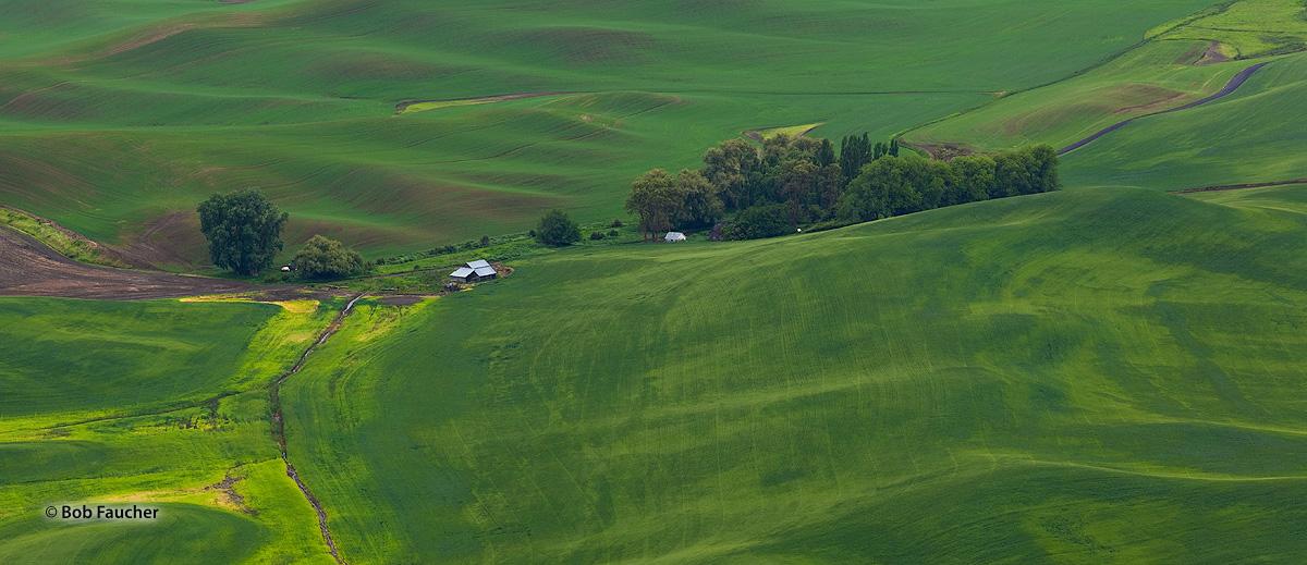 Palouse, Steptoe Butte, green, photo