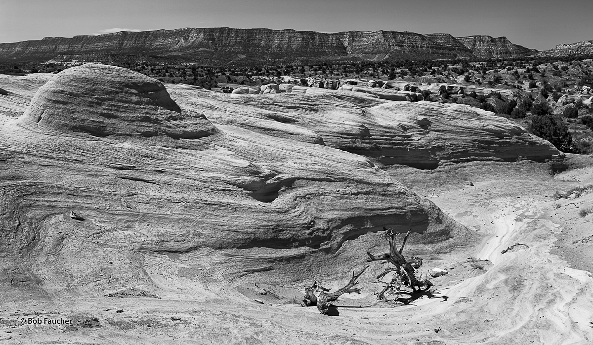 Old, dead snags lie in a dry wash below some highly eroded yet generally smooth and rounded sandstone formations and the distant...