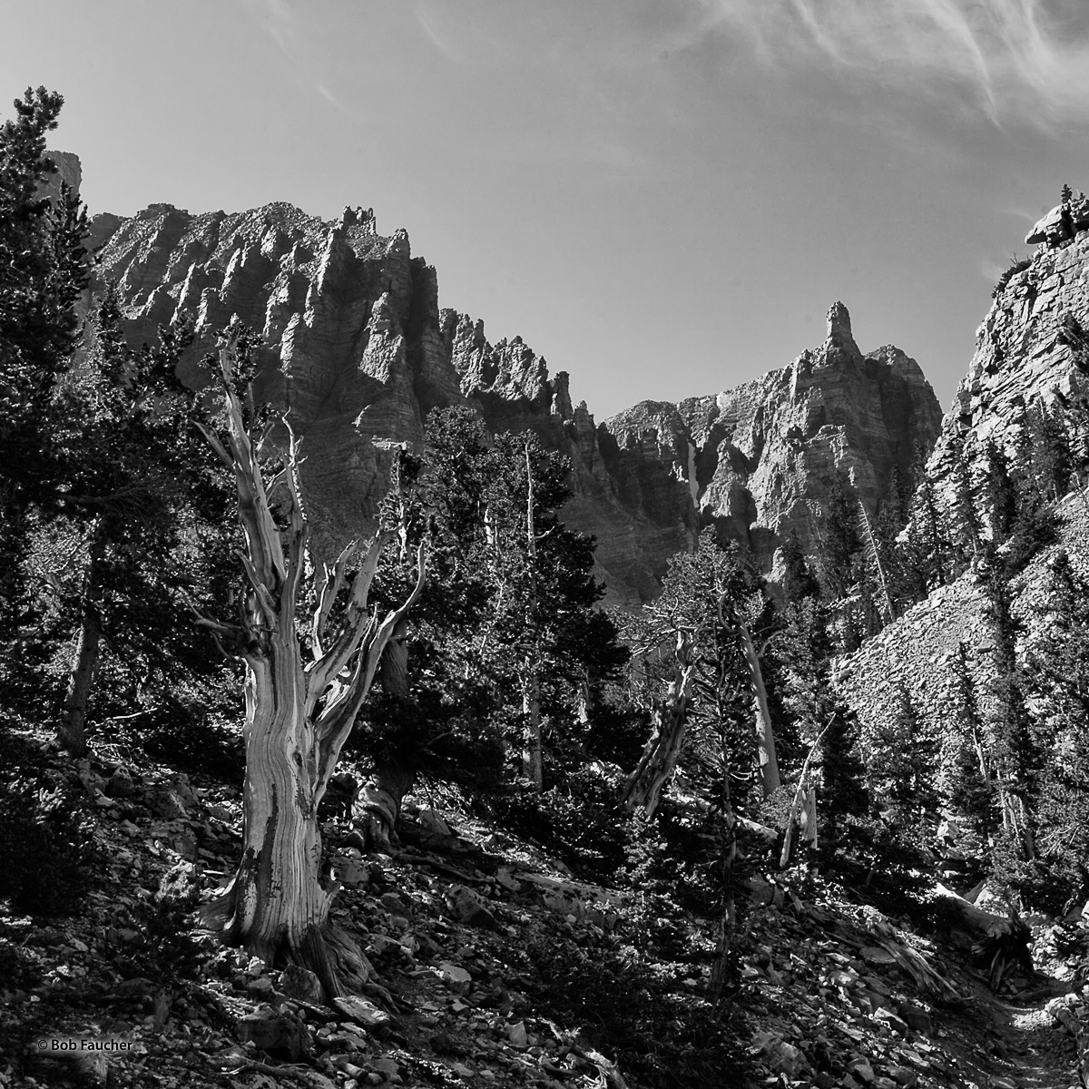 The Bristlecone Grove in Great Basin NP lives on a moraine below the cirque created by Mt. Jeff Davis and Wheeler Peak with Pinnacle...