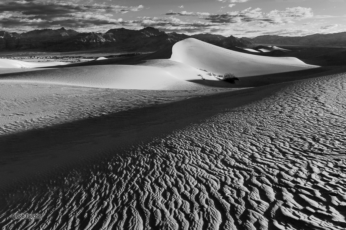 Sunrise's low-angle light plays on the surfaces of the Mesquite Flat sand dunes emphasizing the forms and textures of the dunes...