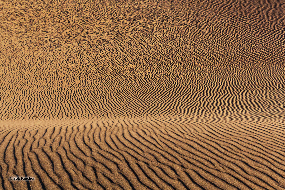 Wind-driven sands form constantly moving ridges on the undulating surfaces of the dunes.