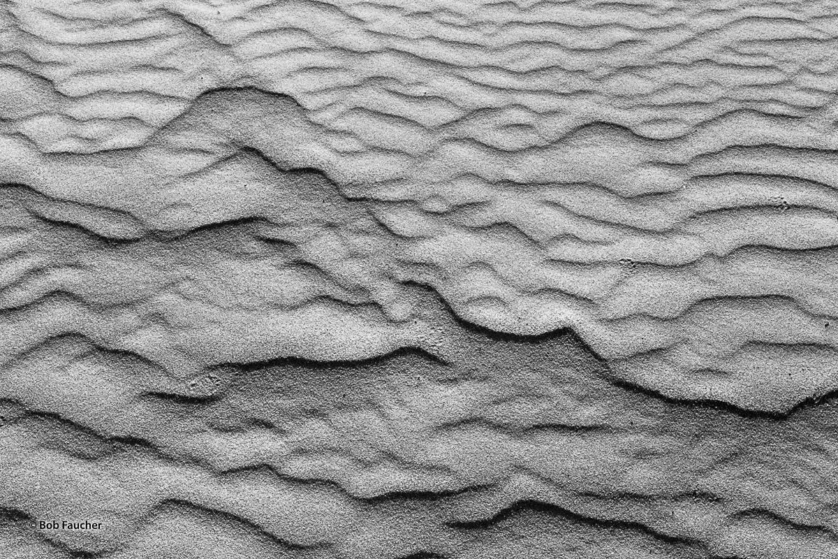 Delicate footprints, that appear to be from a felid, cross a small area of wind-carved sand