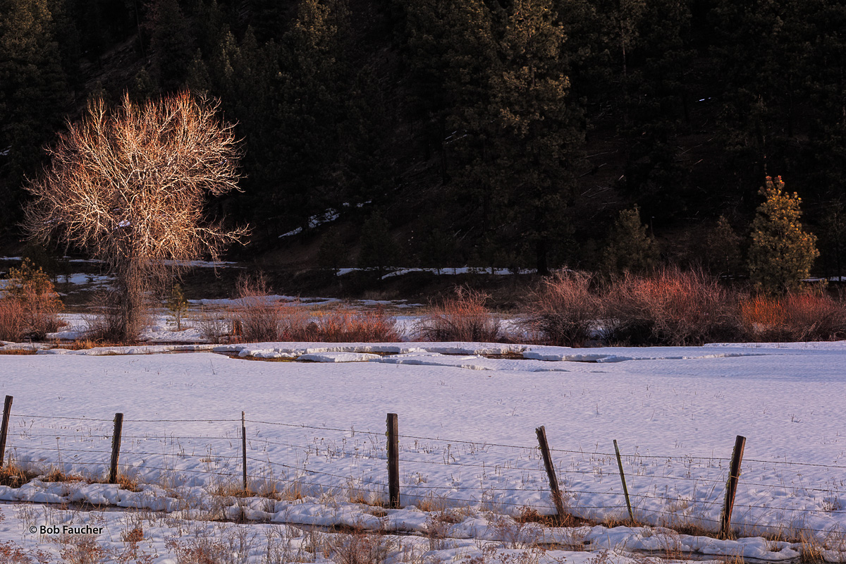 Morning sun highlights barren Cottowood, willows and various evergreens on the shore of Grande Ronde River encountered along...