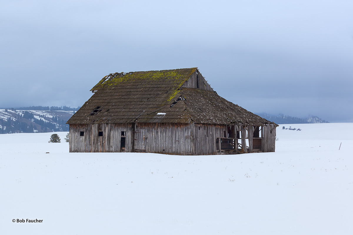 An old barn, surrounded by snow, has not had visitors for a very long time