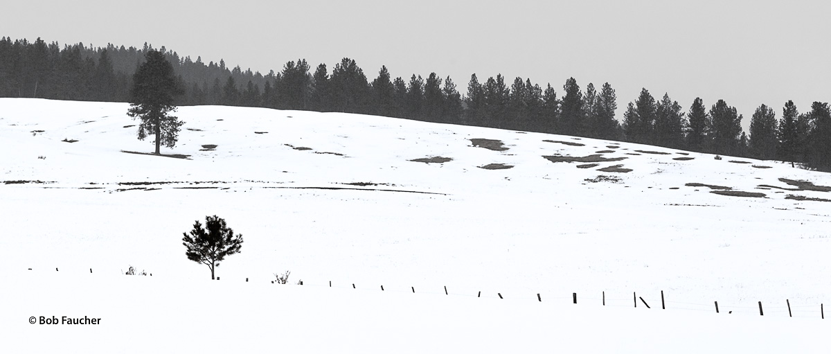 Deep snow engulfs a fence as it passes by a young conifer in a field
