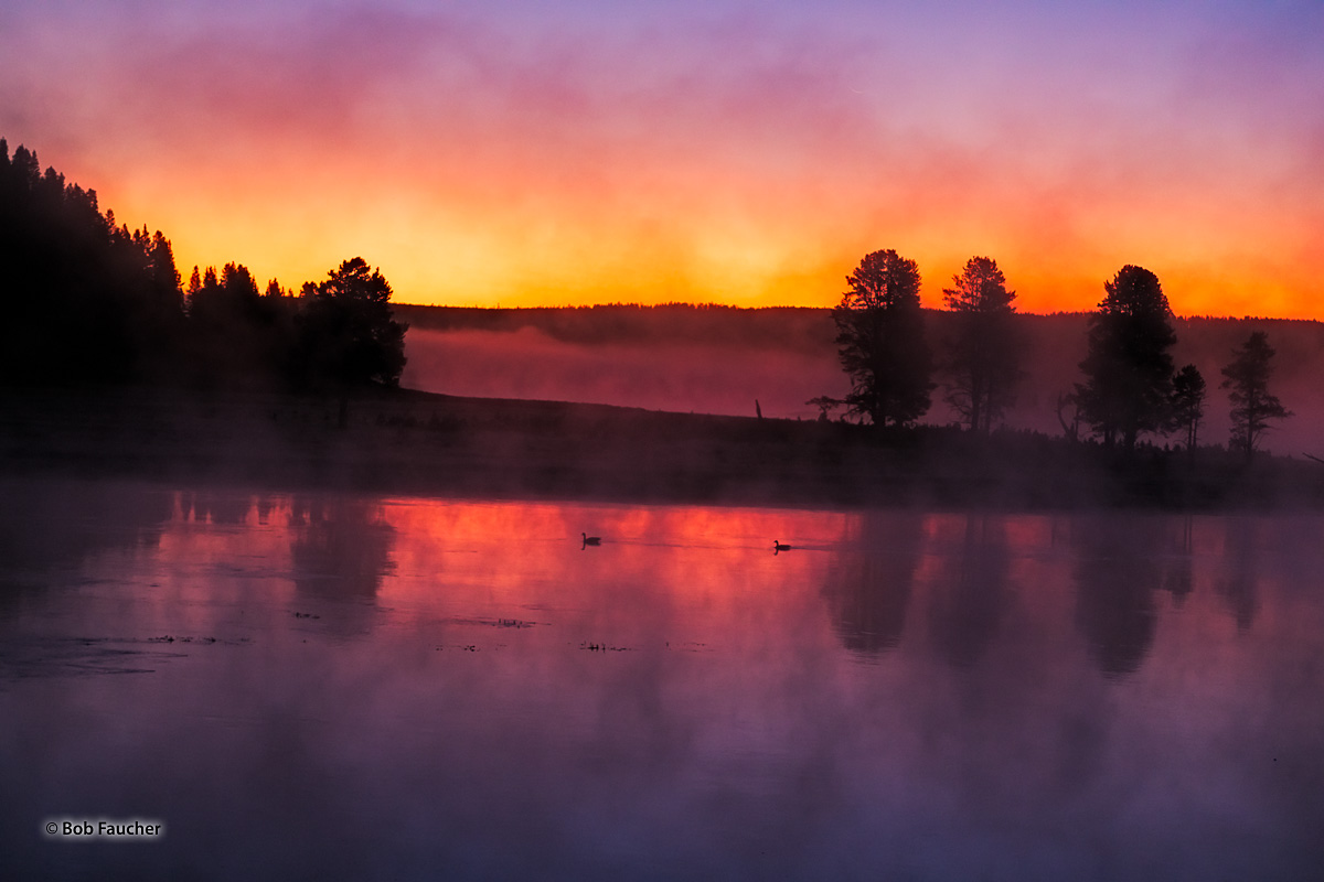 Early dawn finds a pair of waterfowl paddling down the Yellowstone River in Hayden Valley. Heavy fog fills the sky and hovers...