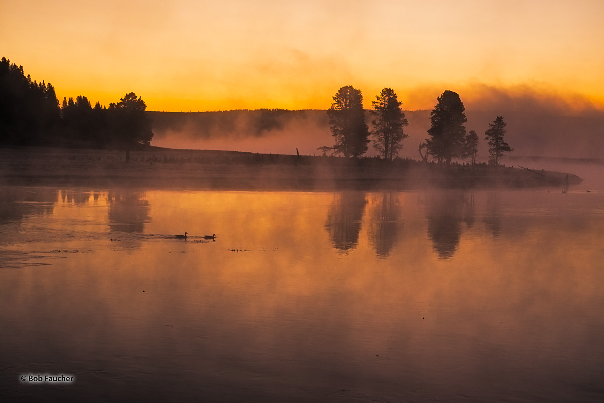 Late dawn finds a pair of waterfowl paddling up the Yellowstone River in Hayden Valley. Heavy fog fills the sky and hovers over...