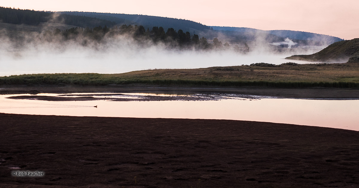 The pastel pink of dawn finds a single waterfowl paddling across a small side channel of the Yellowstone River with the main...