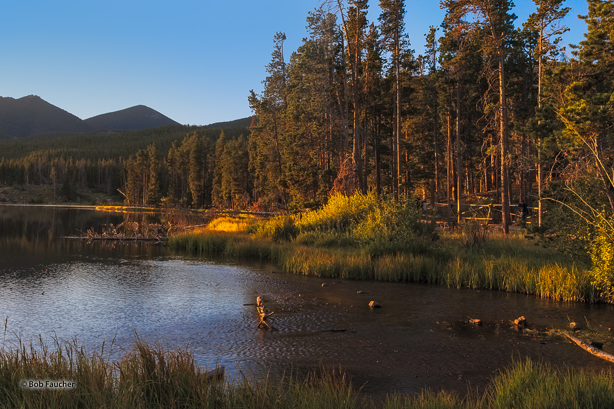 The warm light of sunrise streams across Sprague Lake and sets the shoreline grasses, willows and trunks of the conifers ablaze...