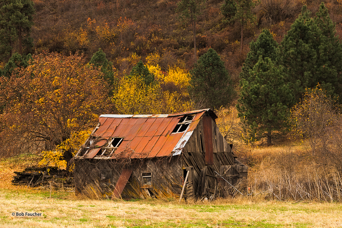 Fall color, derelict building, photo