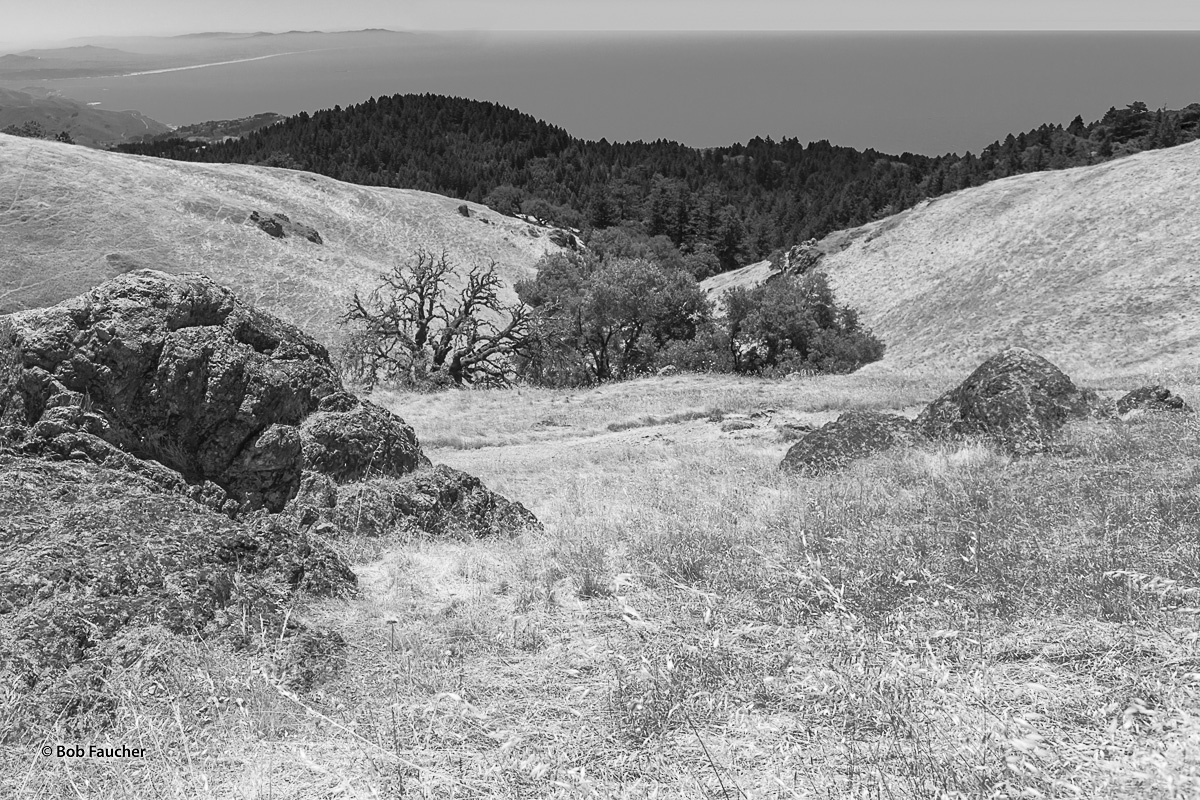 Outcroppings of green Serpentine, the state rock of California, are found all along the trails covering Mount Tamalpais, especially...