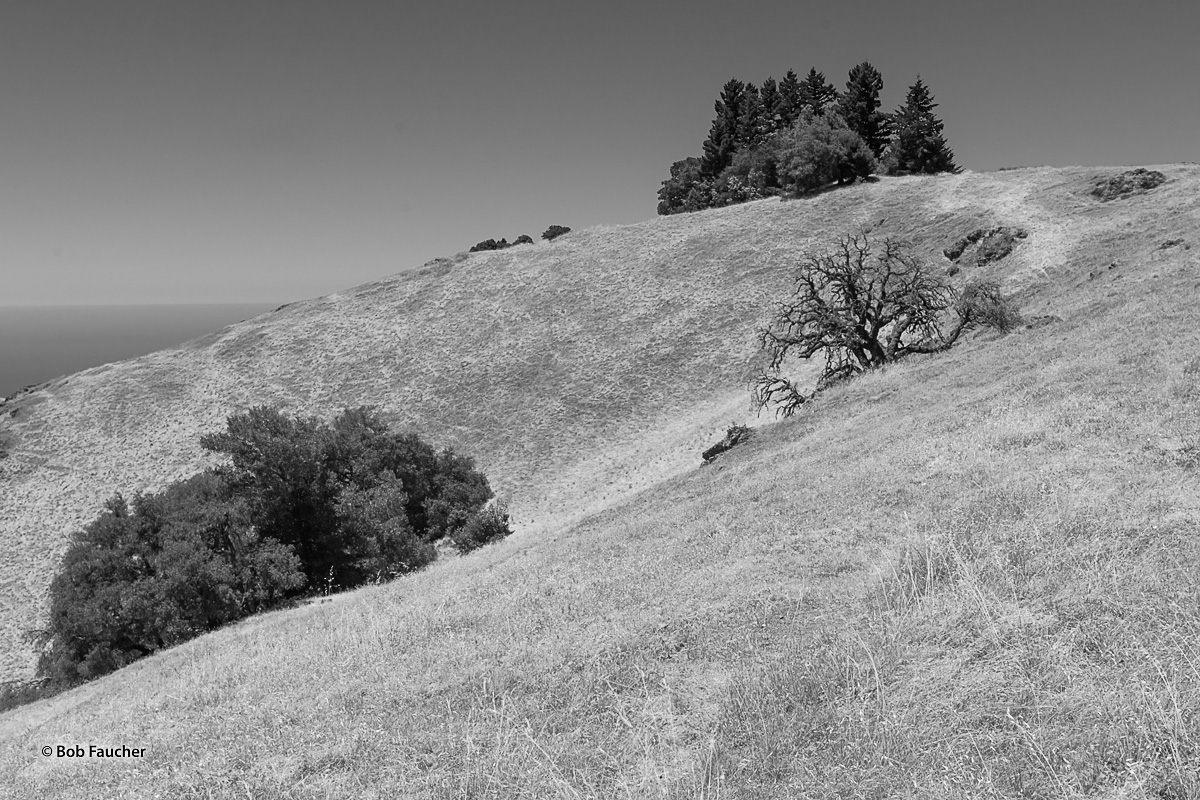 Mount Tamalpais SP, photo