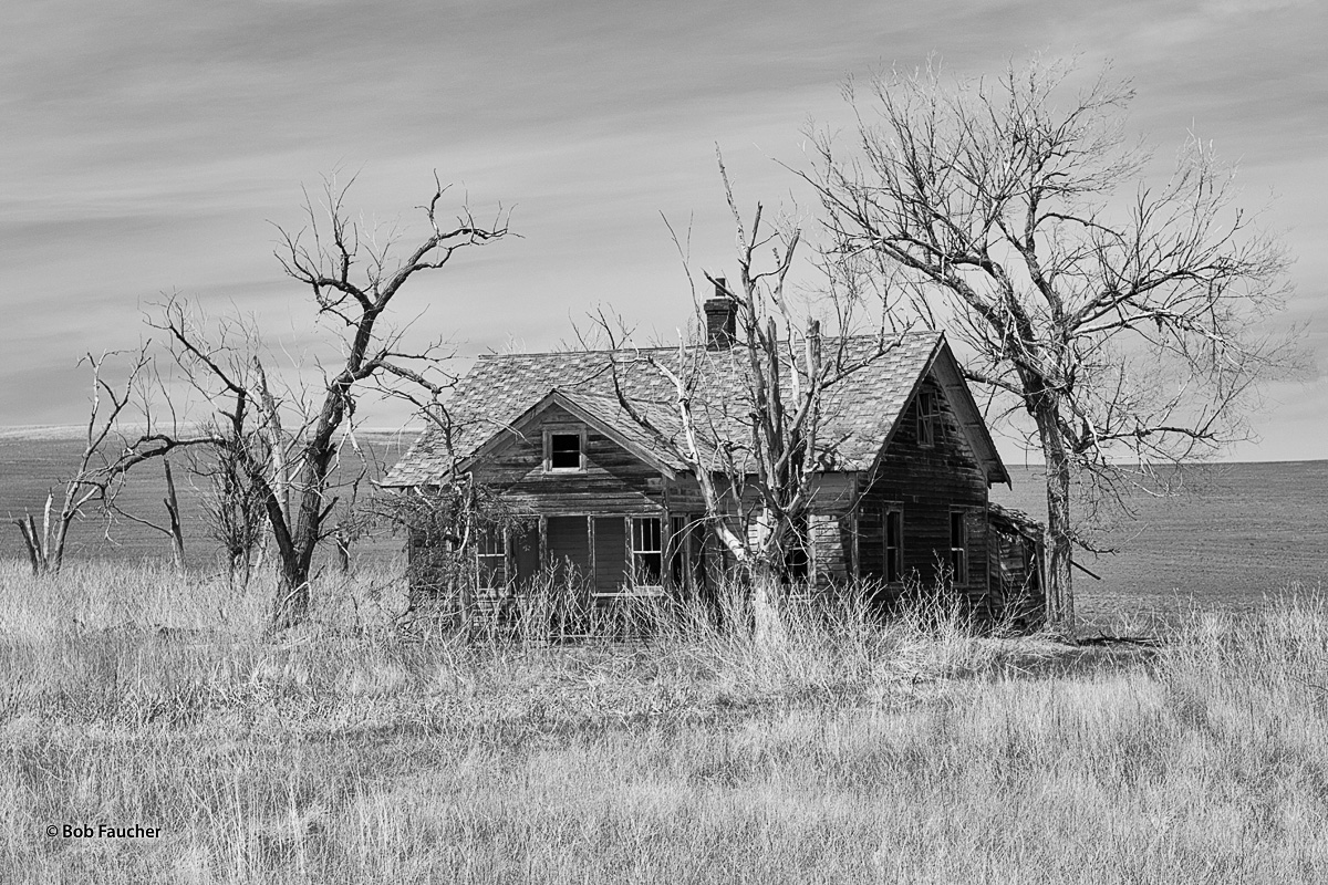 Old, leafless trees, all leaning toward the abandoned home they surround, appear to be attending to the deteriorating structure...